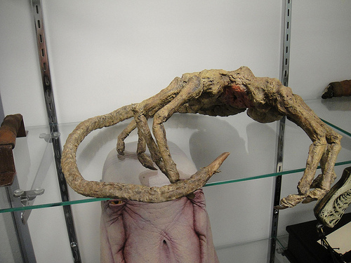 facehugger photo